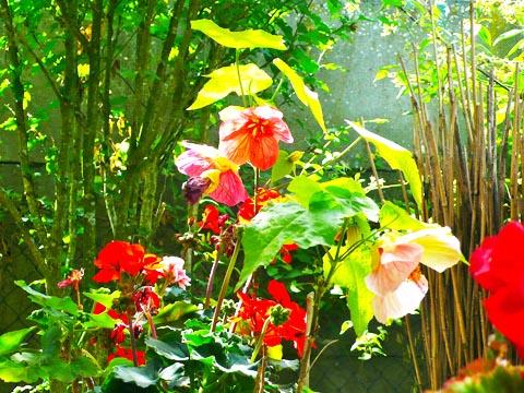 là-bas, dans mon jardin