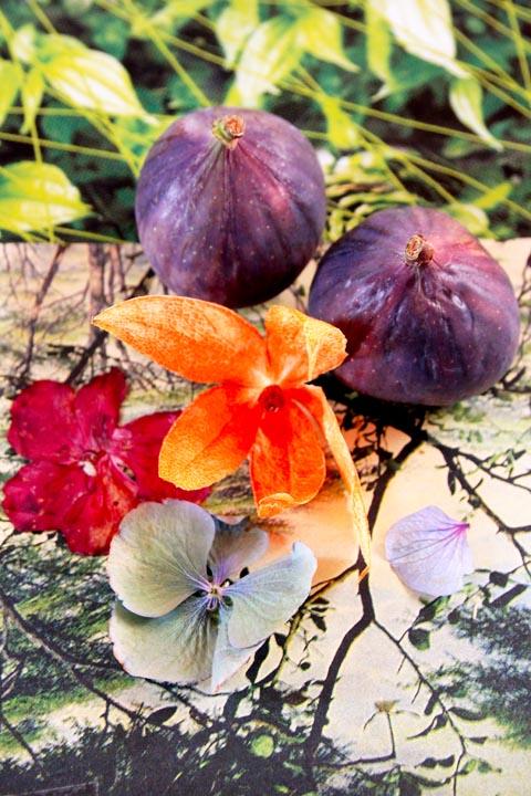 des figues et des fleurs
