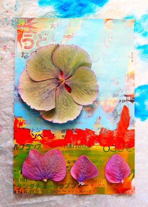 fleurs séchées et papiers peints
