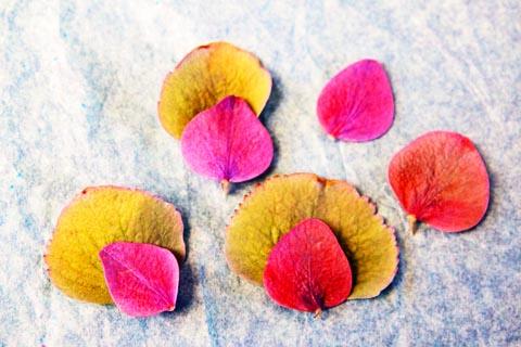 fleurs séchées et peinture - Sophie Plouvier
