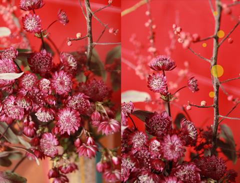 fleurs fond rouge