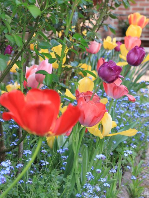 photos florales et printanières!