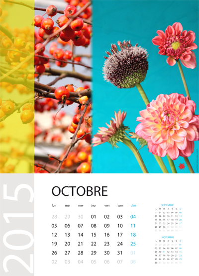 calendrier 2015 sophie plouvier