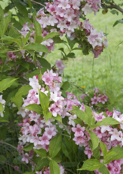 photos de fleurs en campagne