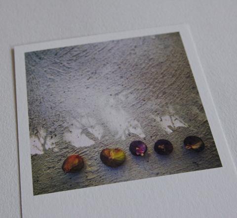 cartes postales nature!