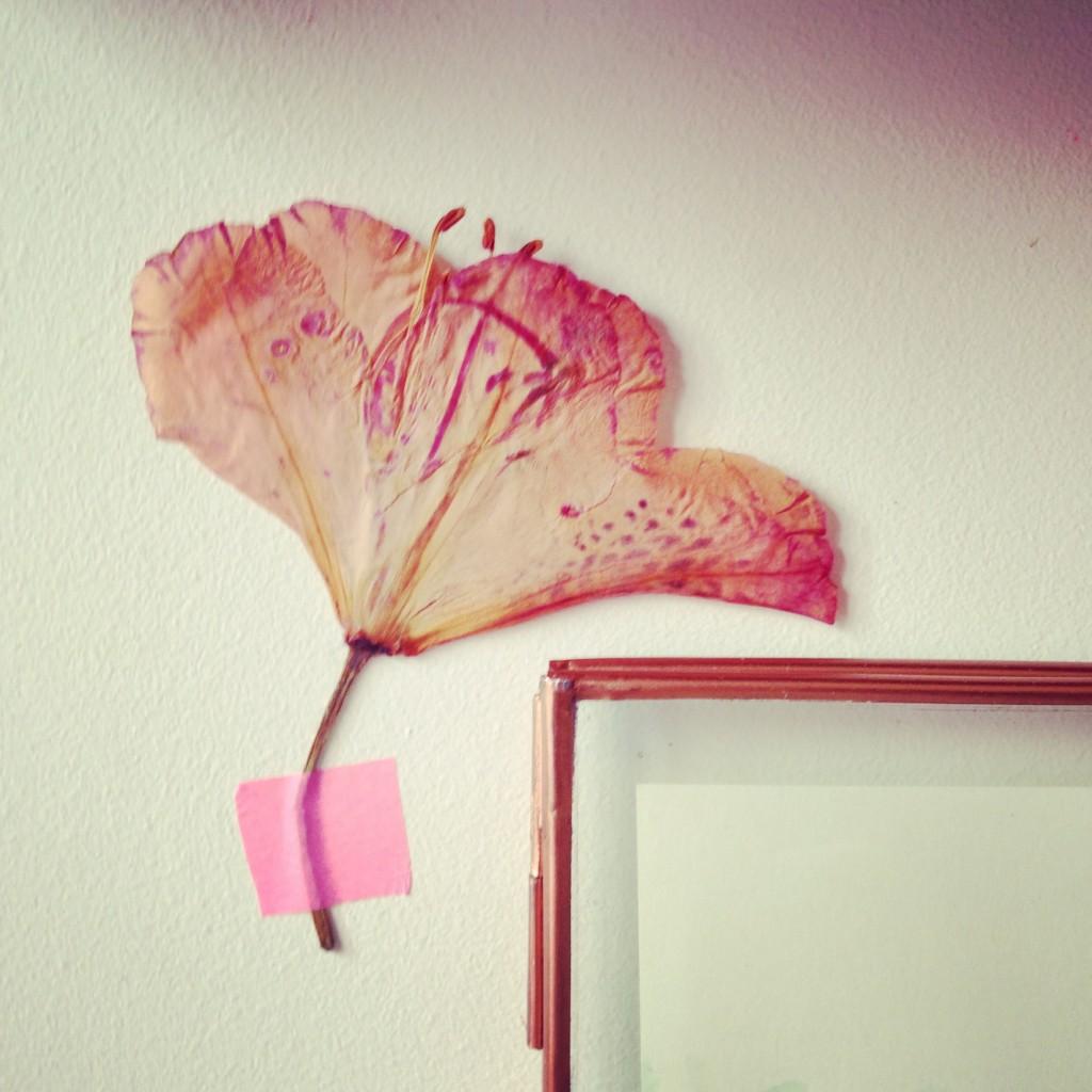fleur séchées