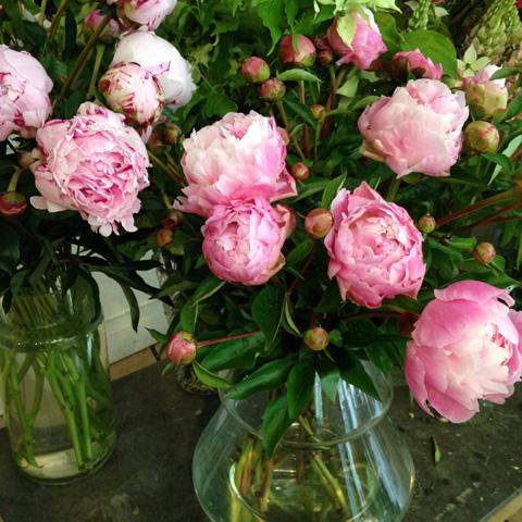 Marion Audier, fleuriste à Paris - photo Sophie Plouvier