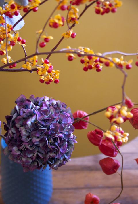 citrouille et couleurs d'automne