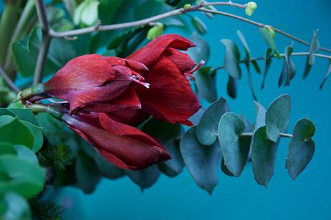 bouquet de fleurs - photo Sophie Plouvier