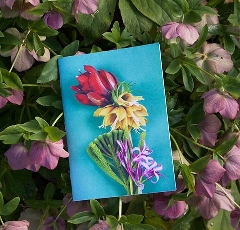 cahiers fleuris Sophie Plouvier