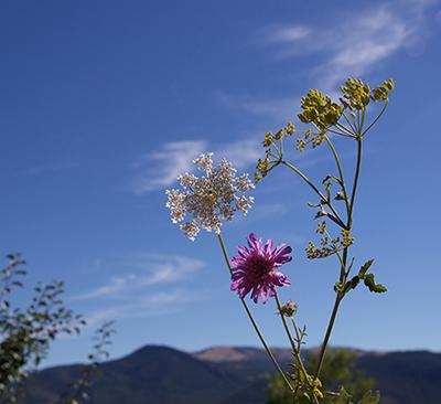 photo nature Sophie Plouvier
