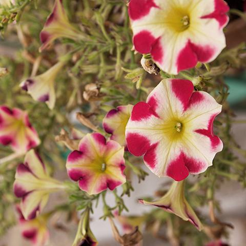photo fleur - sophie plouvier