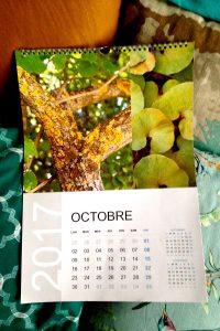 calendrier-sophie plouvier