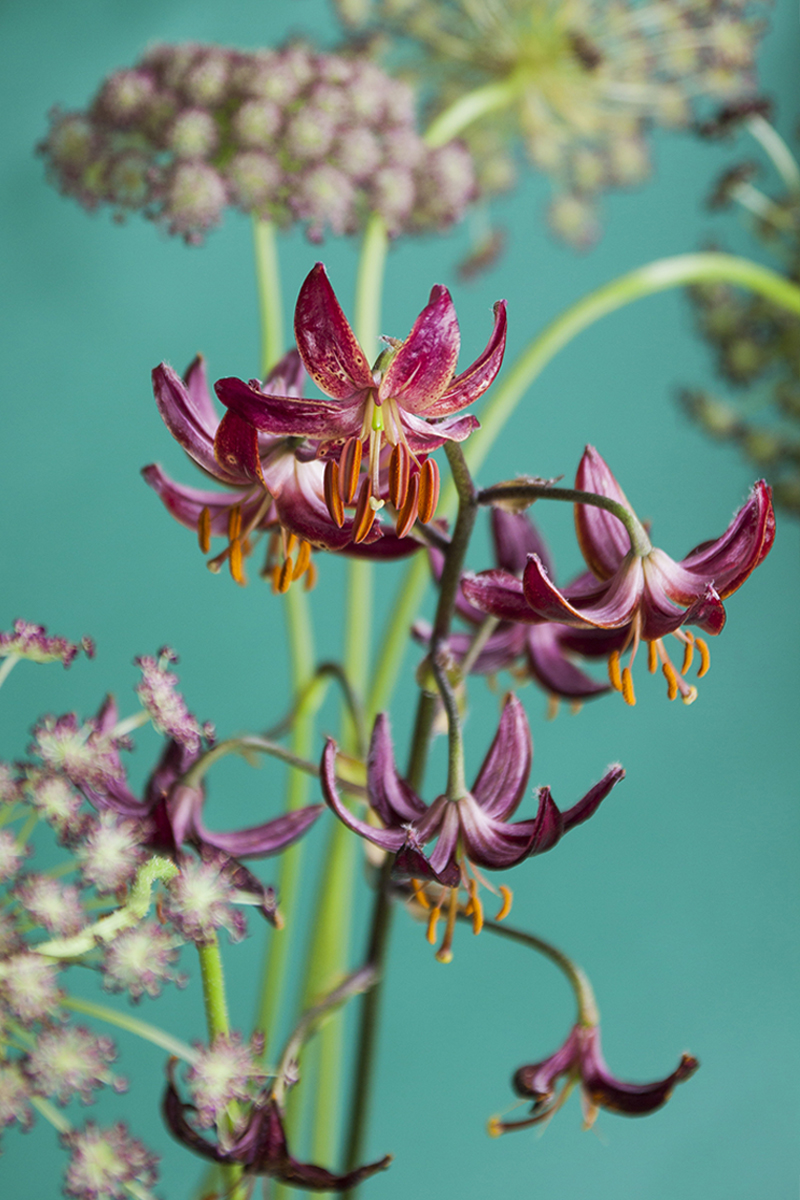 Photos fleuries