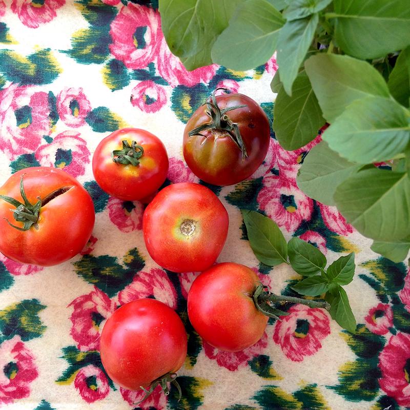 photo Sophie Plouvier - tomates