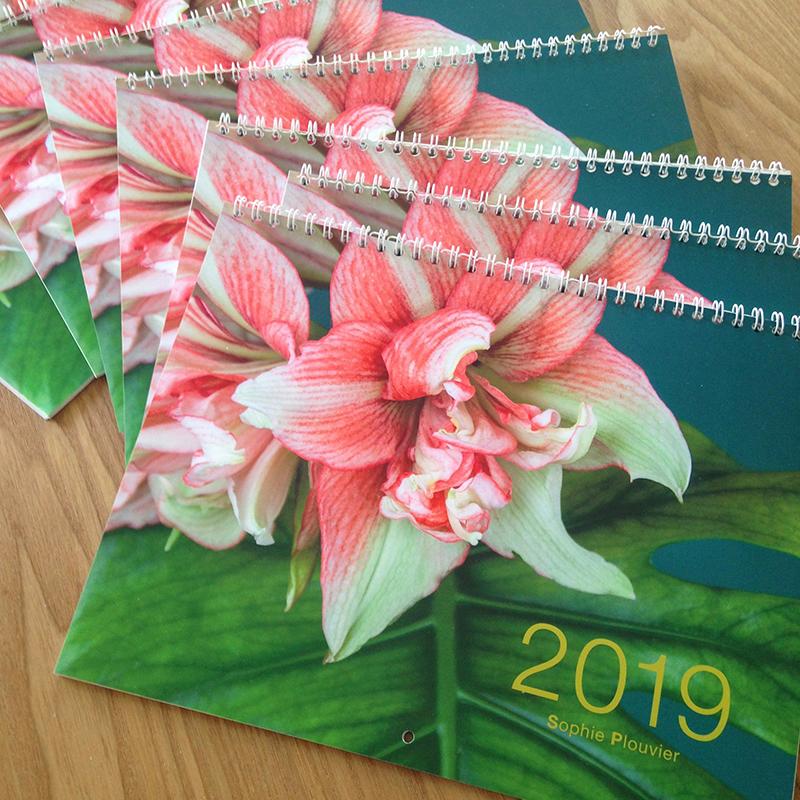 calendrier 2019 Sophie Plouvier