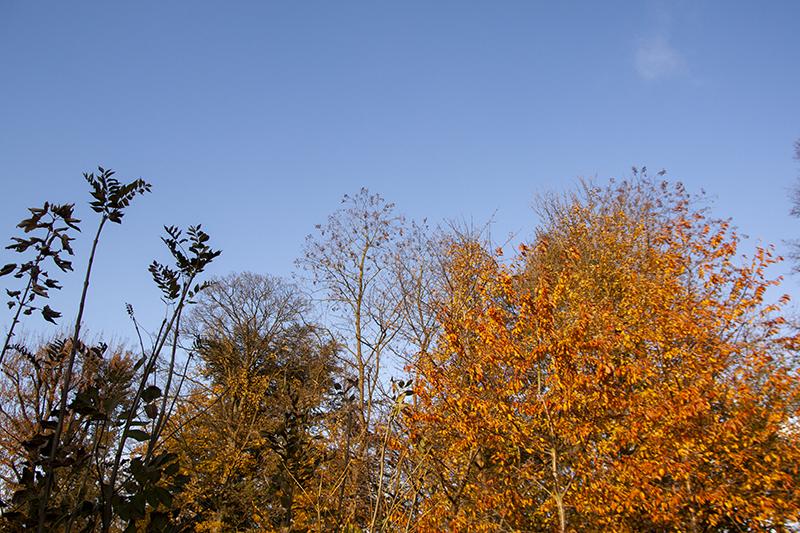 photo arbres d'Automne Sophie Plouvier