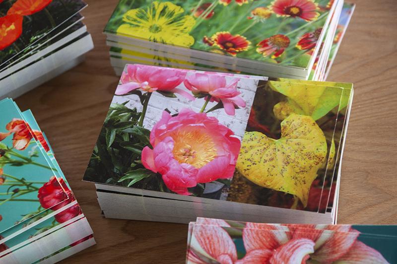 carte postale Pivoine Sophie Plouvier