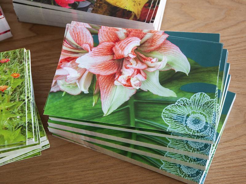 carte postale amaryllis Sophie Plouvier