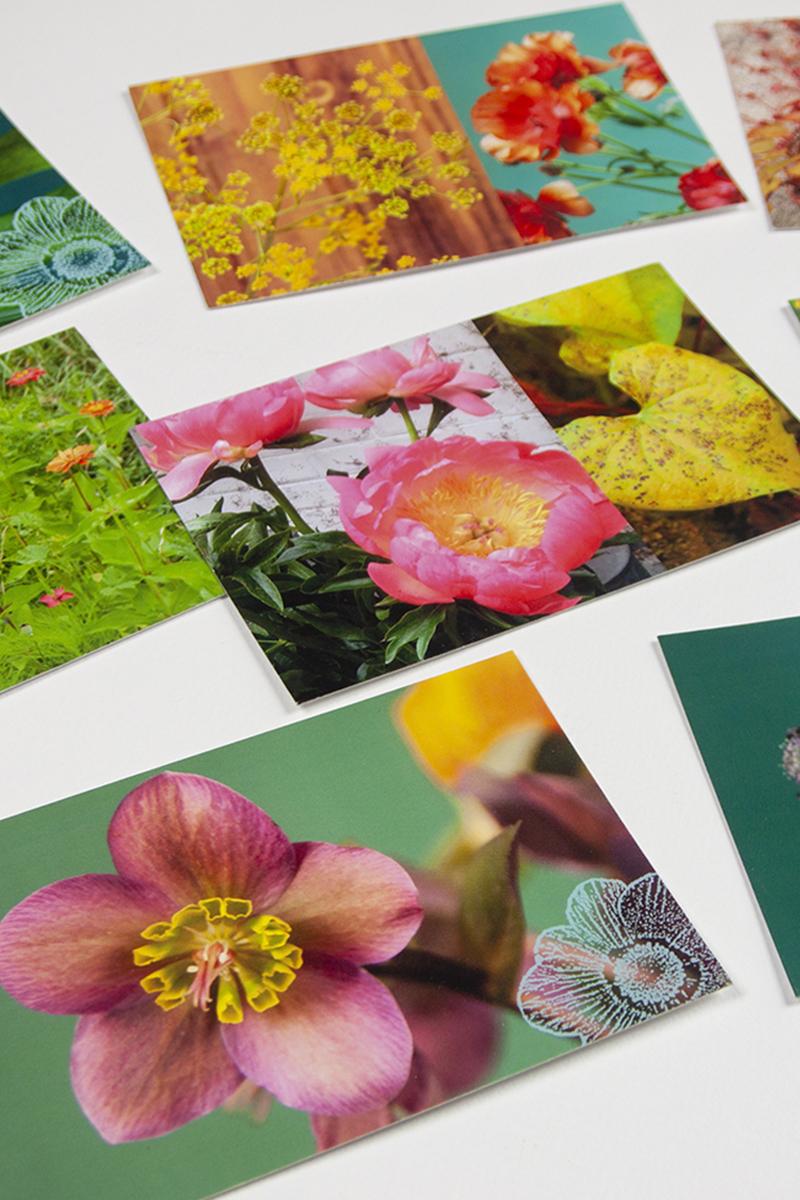 Cartes postales fleuries