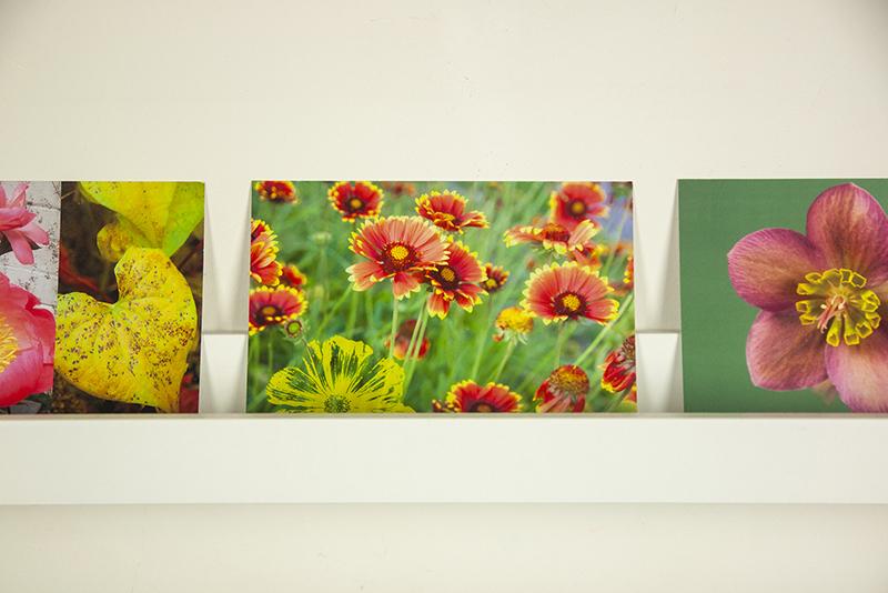 cartes postales fleuries Sophie Plouvier