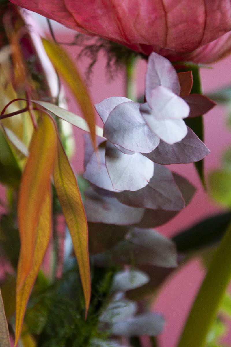 photo florale et végétale Sophie Plouvier