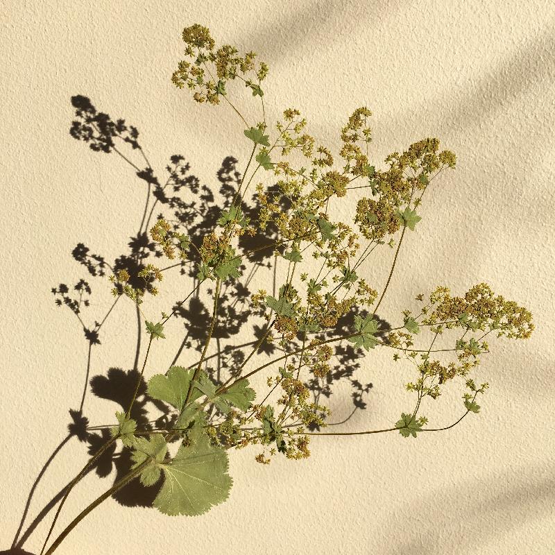 ombres matinales et fleurs séchées - photo Sophie Plouvier
