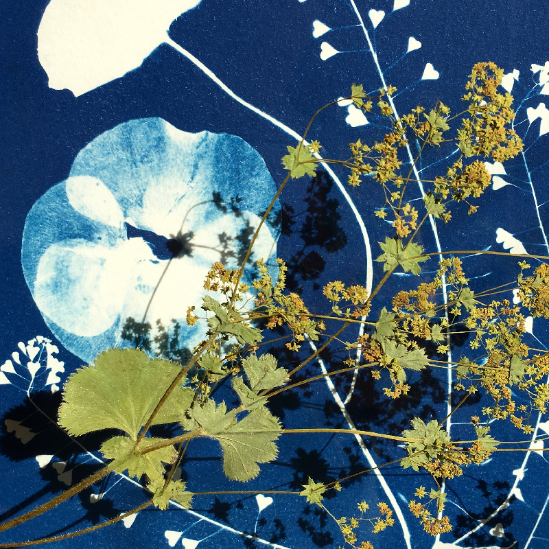 Cyanotype Invincible été - photo Sophie Plouvier