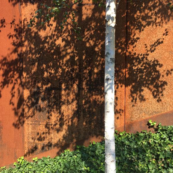 photo ombre arbre - photo vacances Sophie Plouvier