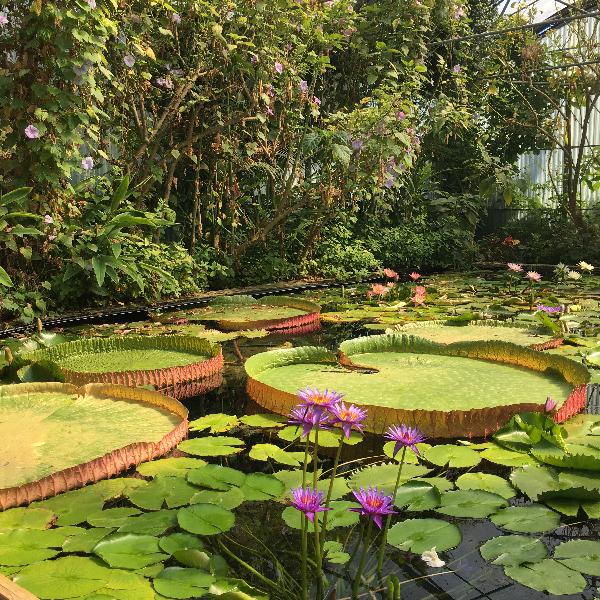 Jardin des Martels - Tarn - photo Sophie Plouvier