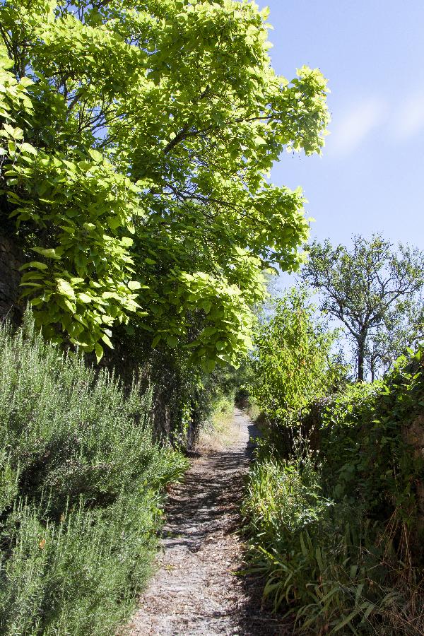 chemin - St Felix sur Sorgue - photo Sophie Plouvier