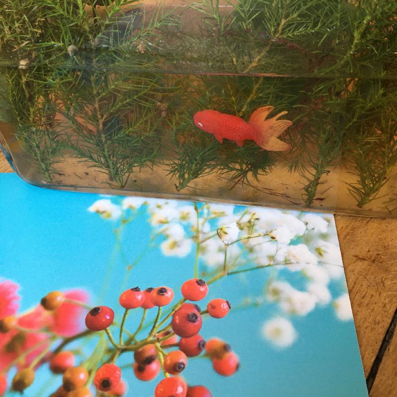 photo fleurie sophie plouvier