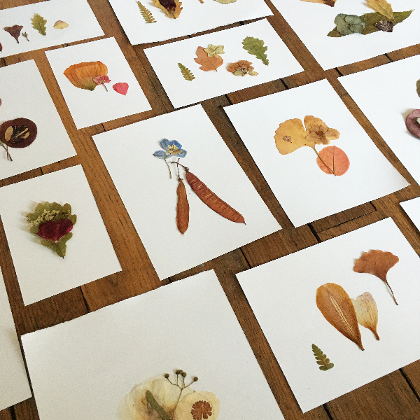 compositions fleurs séchées Sophie Plouvier