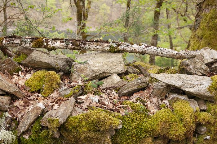 cantal-nature-photo Sophie Plouvier