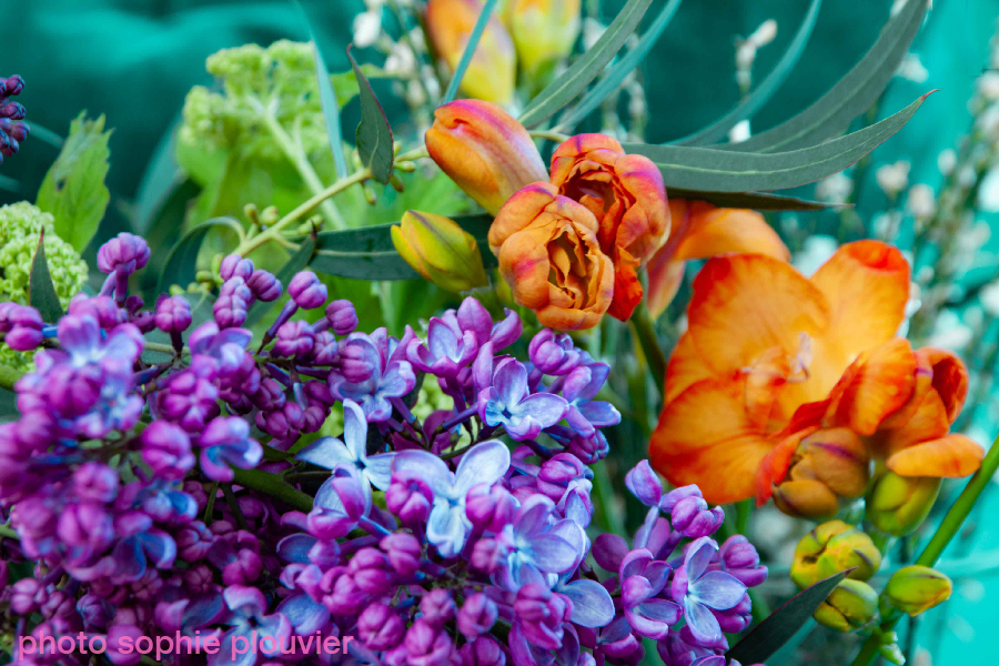 photo fleurs Sophie Plouvier
