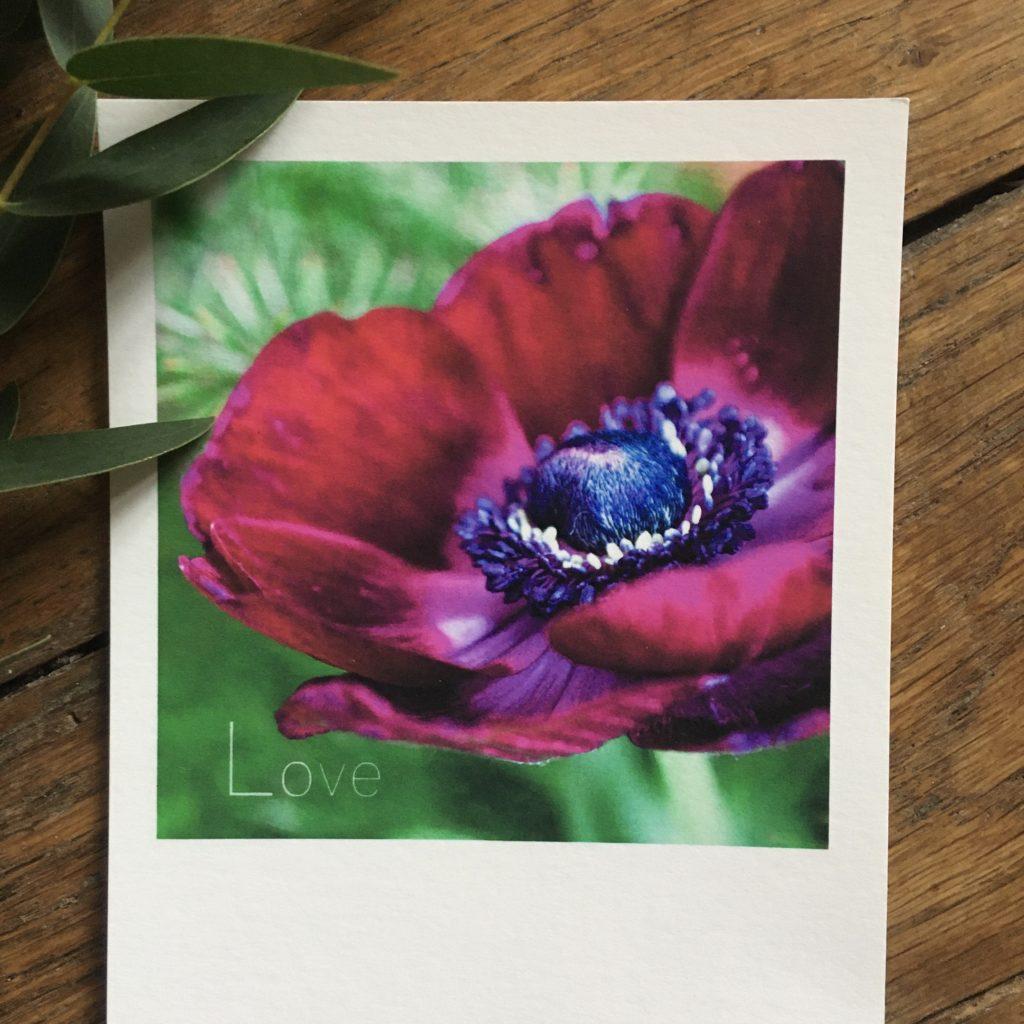 photo fleurs saint valentin Sophie Plouvier
