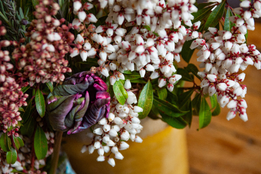 pieris et fleurs - photo Sophie Plouvier