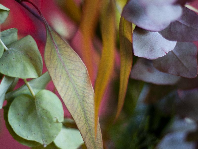 Eucalyptus et fleurs exotiques